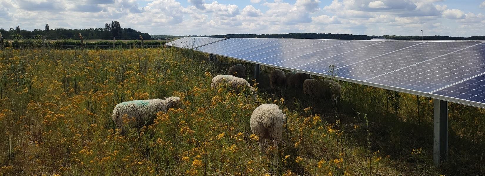 Caroussel moutons et panneaux lassicourt 2
