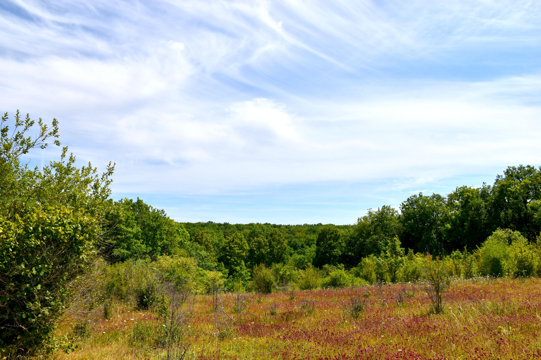 site des Hauts bois